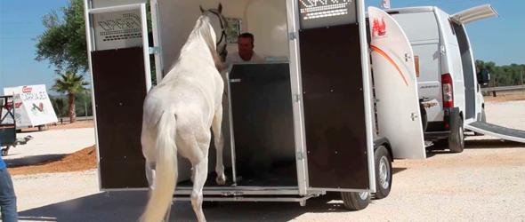 Permiso Conducir transporte caballos